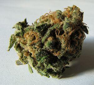 662px-macro_cannabis_bud